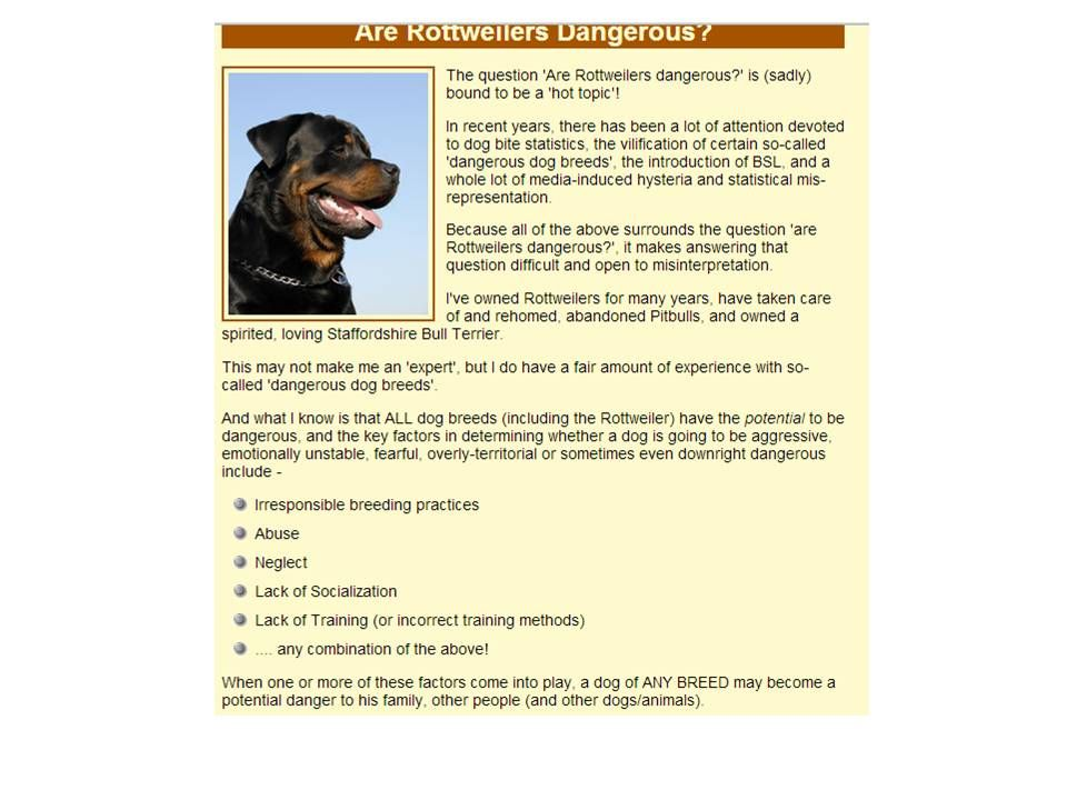 Pin By Candy Miranda On Rottweilers Best Dog Breed Pinterest