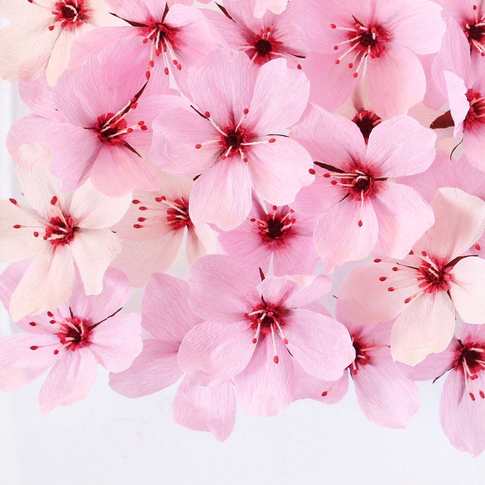 Paper Cherry Blossoms By A Petal Unfolds Paper Flowers Pinterest
