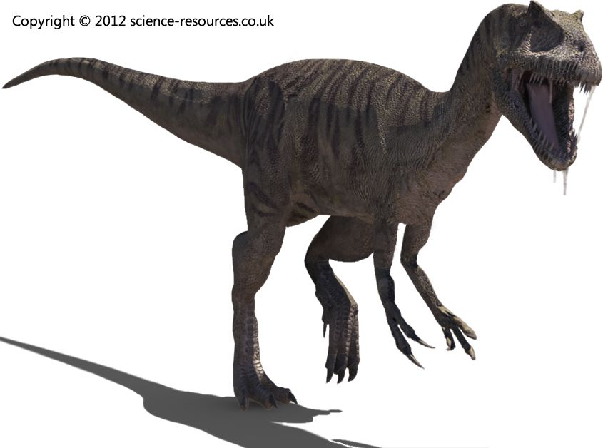 Afrovenator (African Hunter)  Afrovenator was a large African meat-eating dinosaur of the early Cretaceous.
