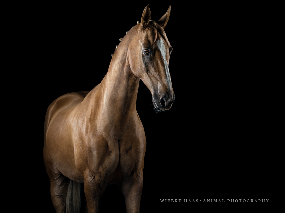 www.horsealot.com, the equestrian social network for riders & horse ...