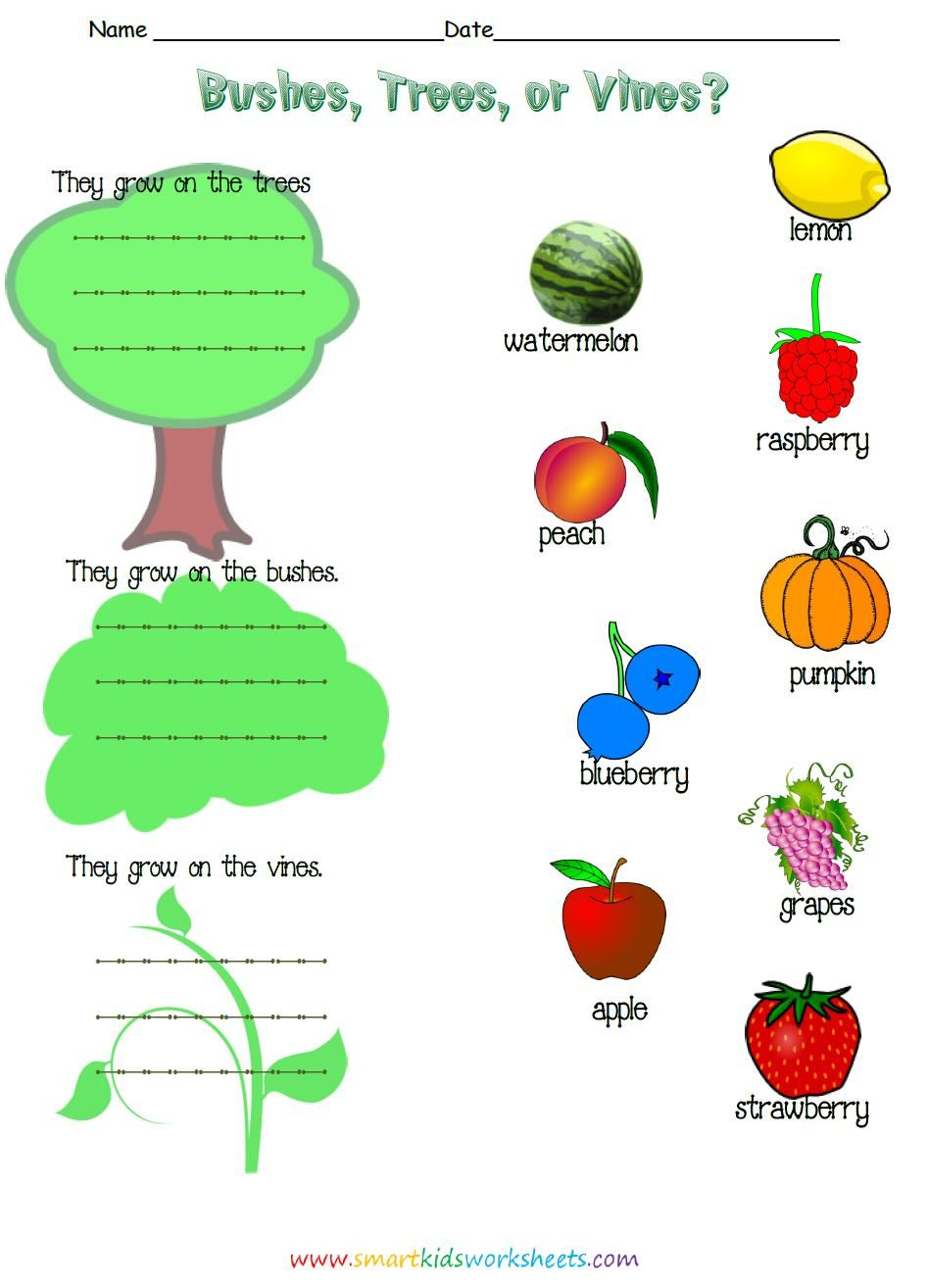 Workbooks living and nonliving worksheets for kindergarten : Learn about where different fruits and vegetables grow, trees ...