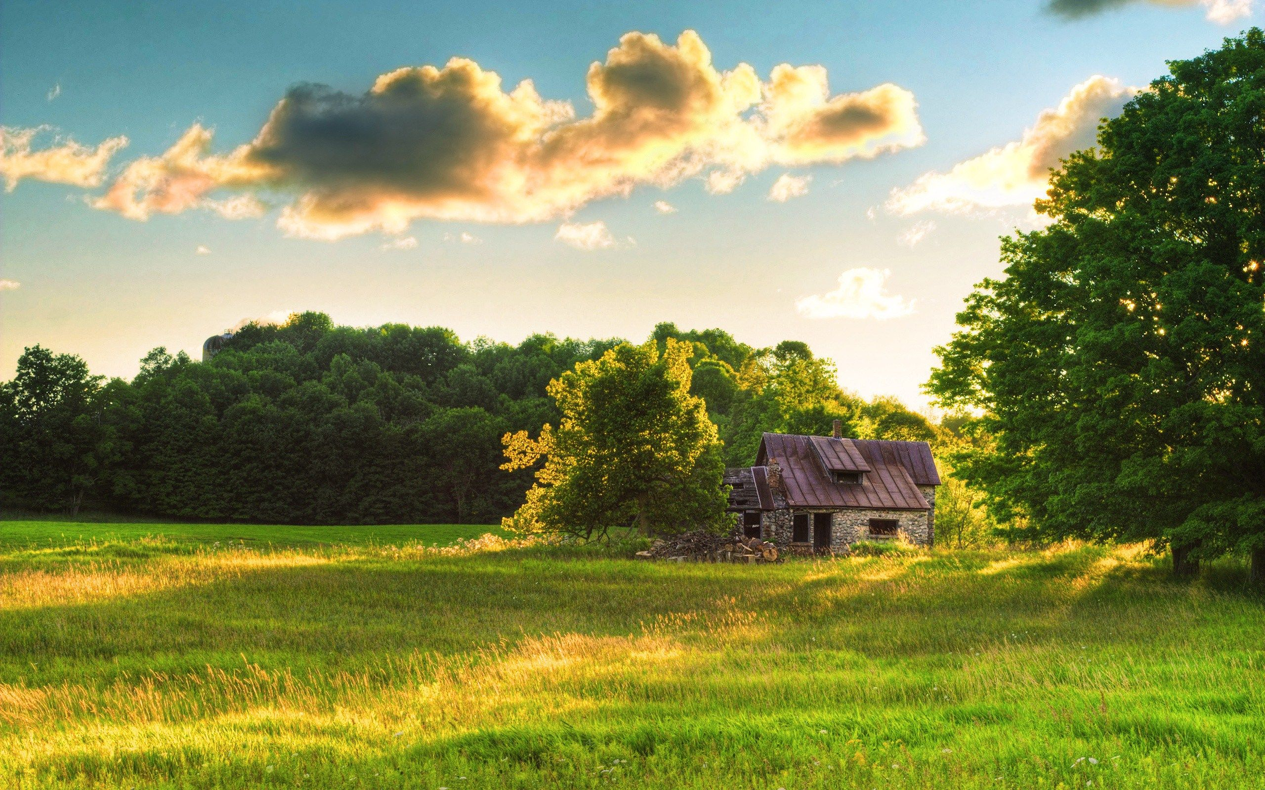 Small House Abandoned Field Forest Green Wide Hd Wallpaper