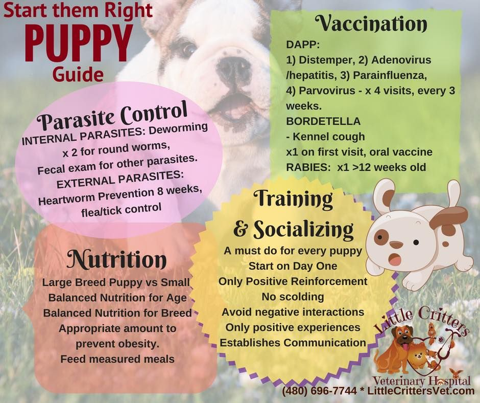 Puppy Plans At Little Critters Vet Animal Infographic Puppies Puppy Care