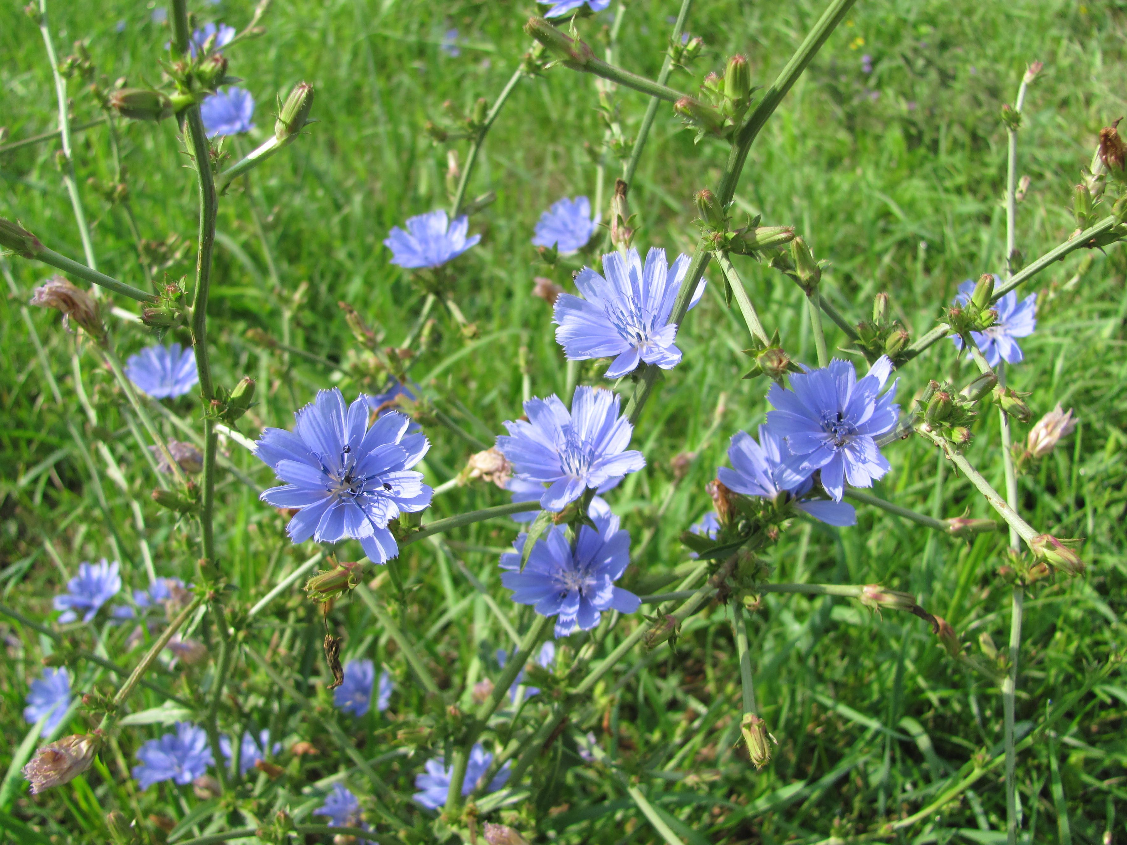 How to Identify Lawn Weed With Small Purple Flowers