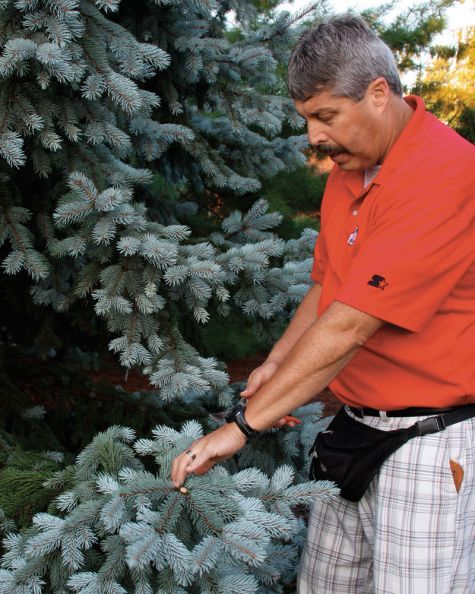 Have you ever pruned so ineptly that your tree or shrub looks like a caricature? Well, don't despair. Help is at hand.