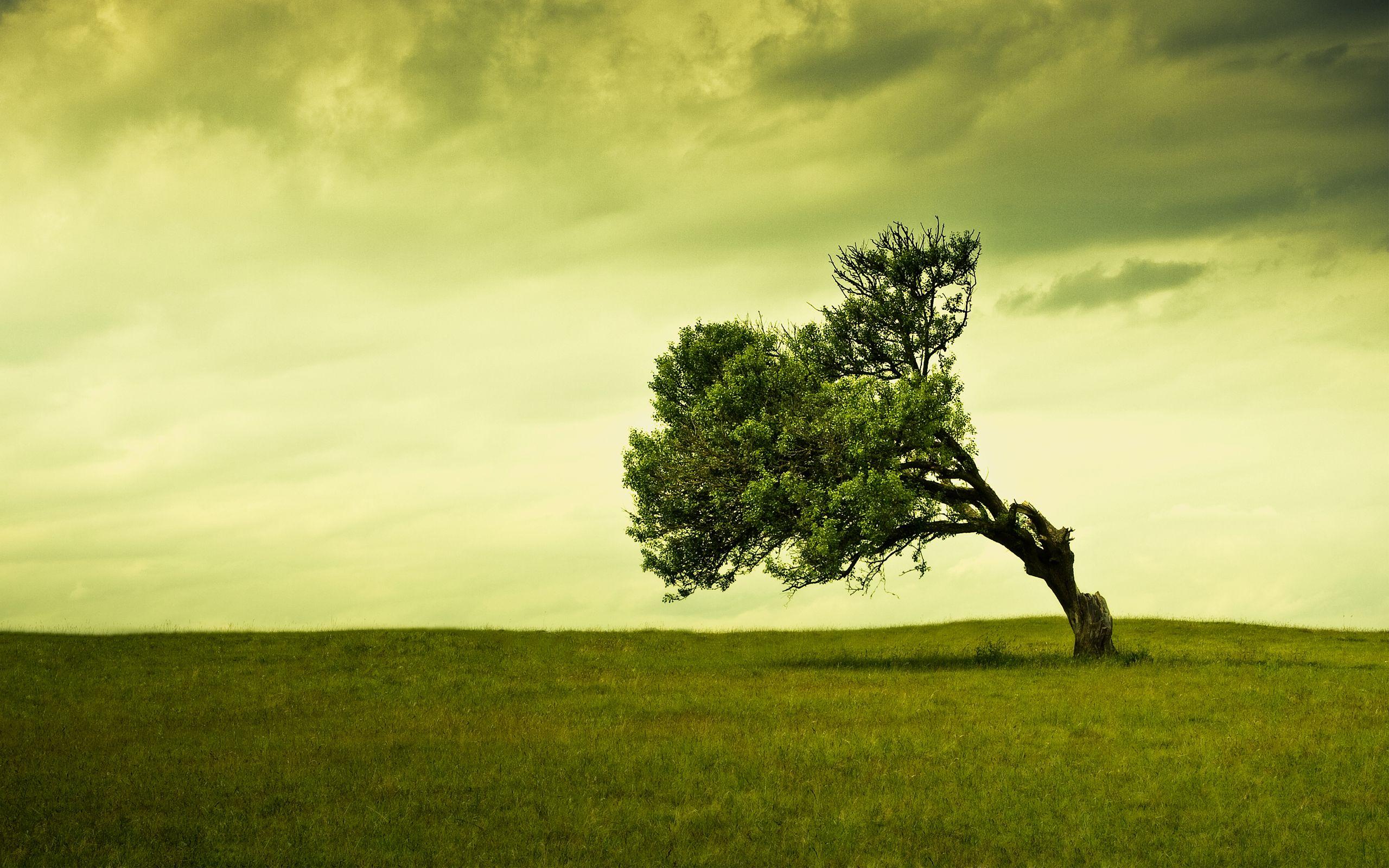 Artwork Cracks Desert Landscape Lone Tree WallDevil