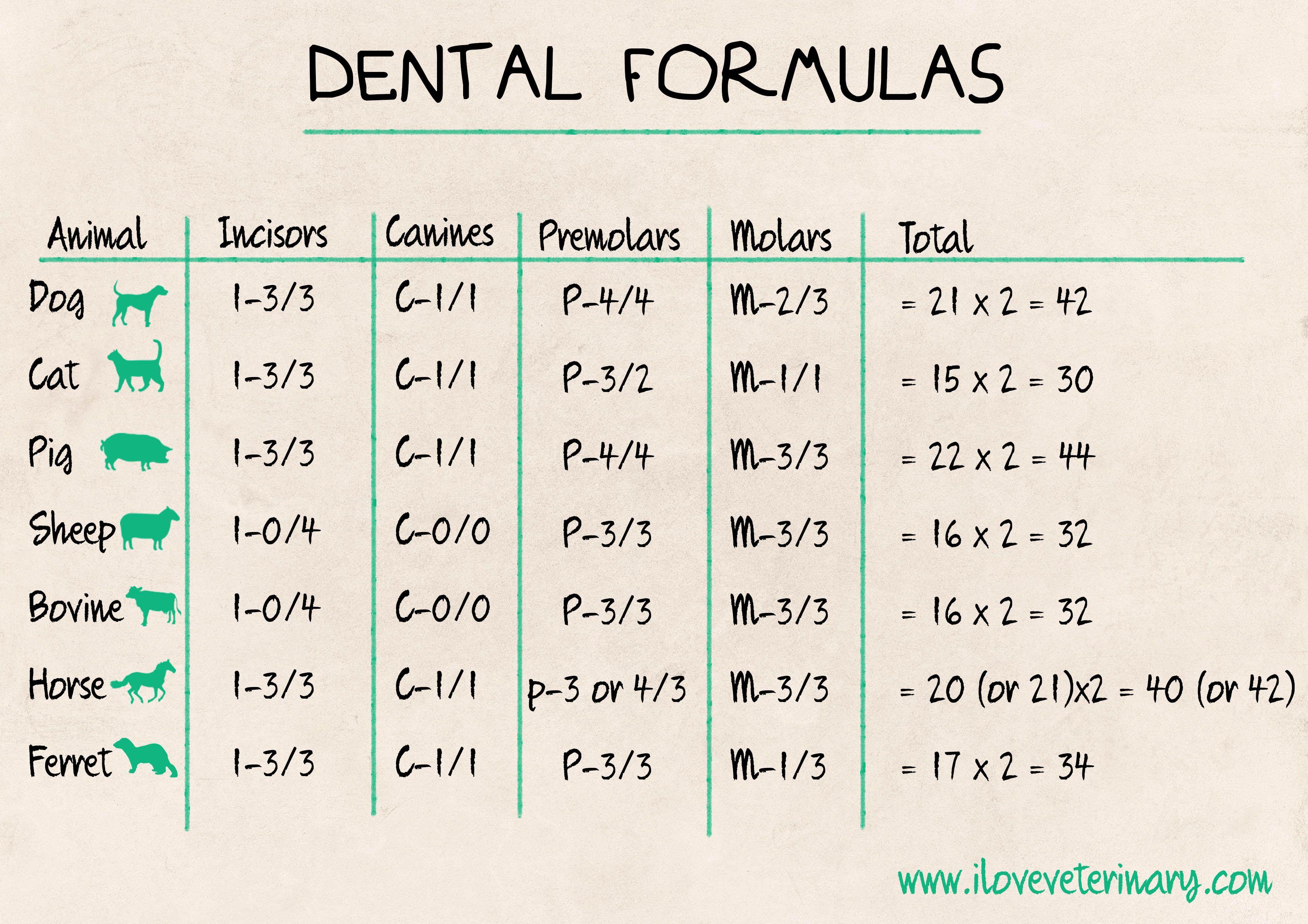 Dental formulas Vet tech school, Vet medicine