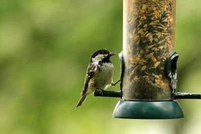 Feeding Backyard Birds: Tips For Attracting Birds To Your ...
