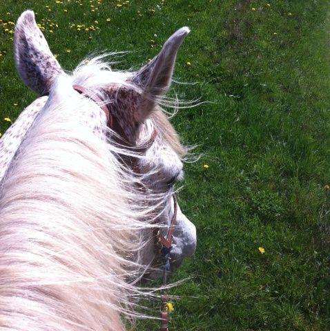Waarom doe ik wat ik doe? Waarom maak ik het mezelf zo moeilijk (soms)? Waarom is het ook zo genieten (vaker)? Waar gaat het eigenlijk over? Vragen waar ik aan dacht toen ik het afgelopen weekend lekker op mijn paard … Lees verder →