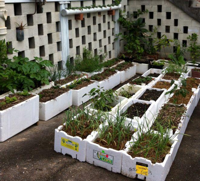 Styrofoam Box Vege Garden With Roman S Water Well Innovation