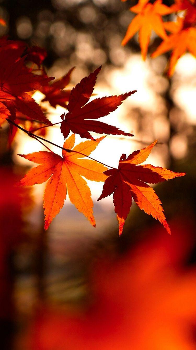 iPhone 6/6S Wallpaper Iphone wallpaper fall, Autumn