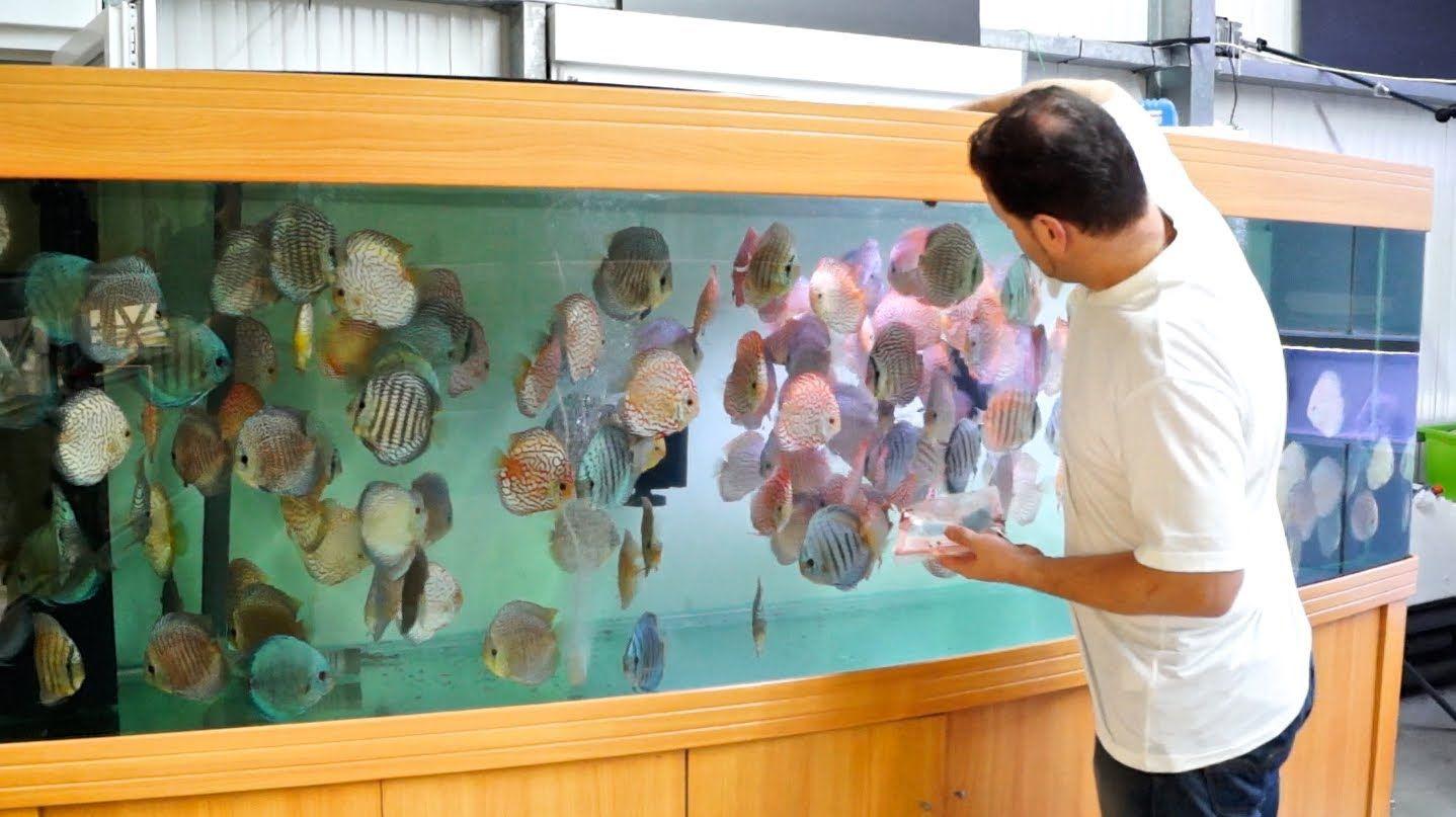 3000 liter diskus aquarium 800 gallon discus tank for Diskus aquarium