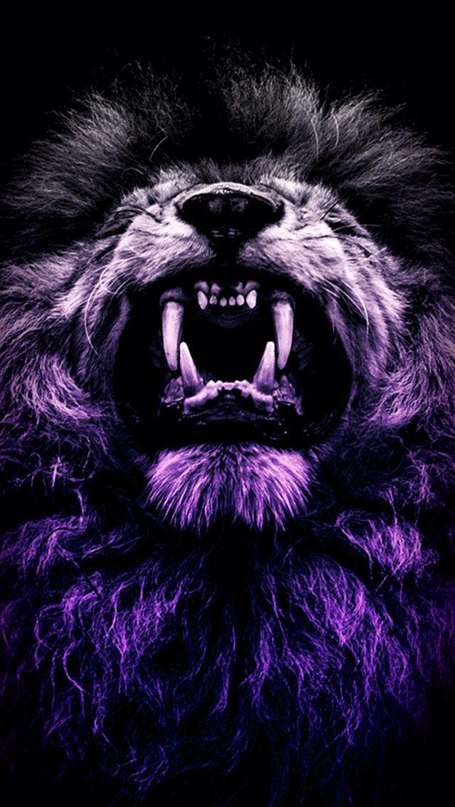 Pin by vincent kunst on kočky Lion wallpaper, Lion live