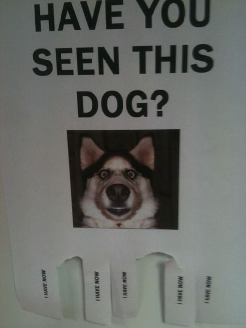 Have You Seen This Dog : Funniest, Street, Fliers, Funny, Signs,, Losing, Jokes