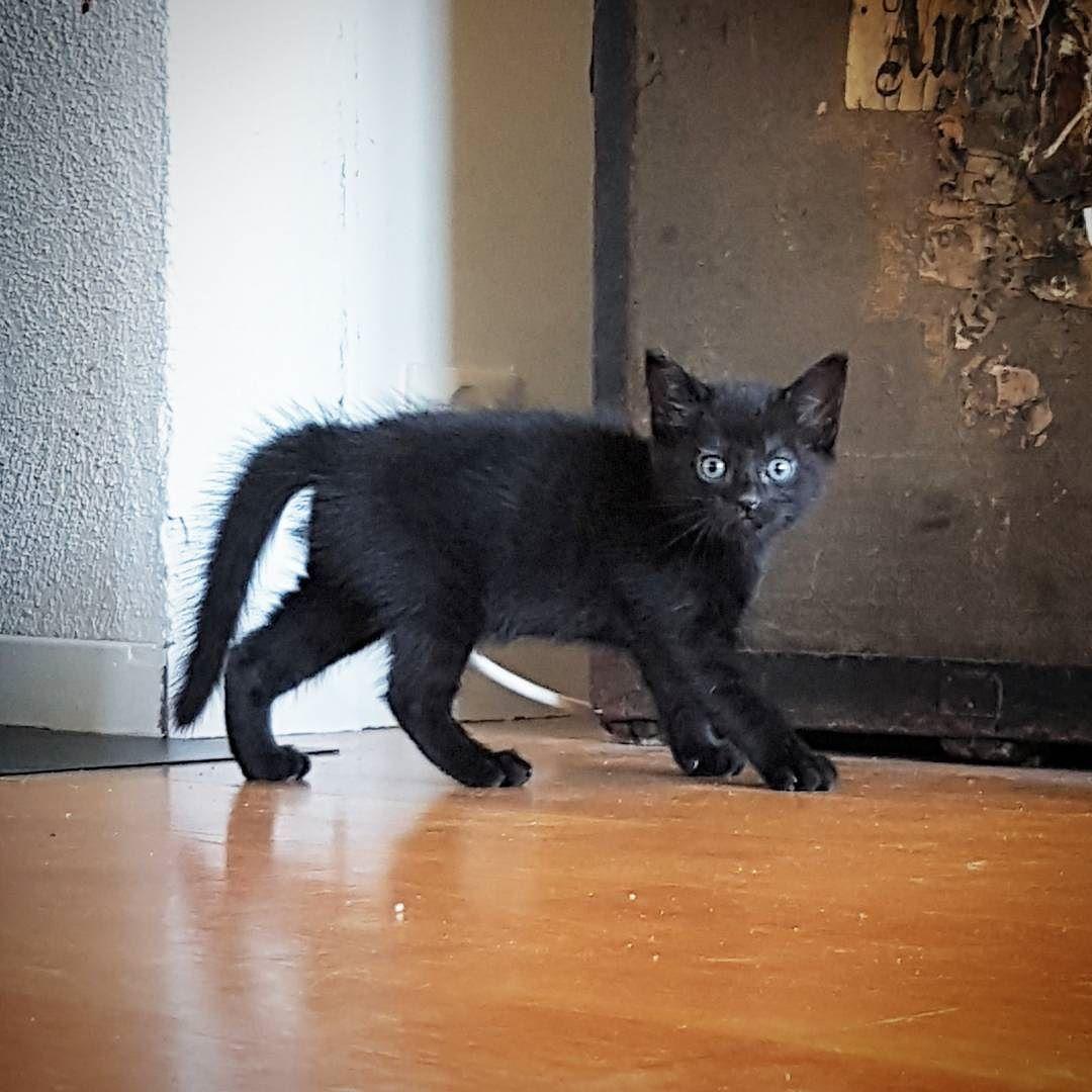 Elvis- så søt    #katt #cat #kitty #kitten #kittens #sort #svart #pet #petstagram #love #sweet #animal by iris_and_her_kittens