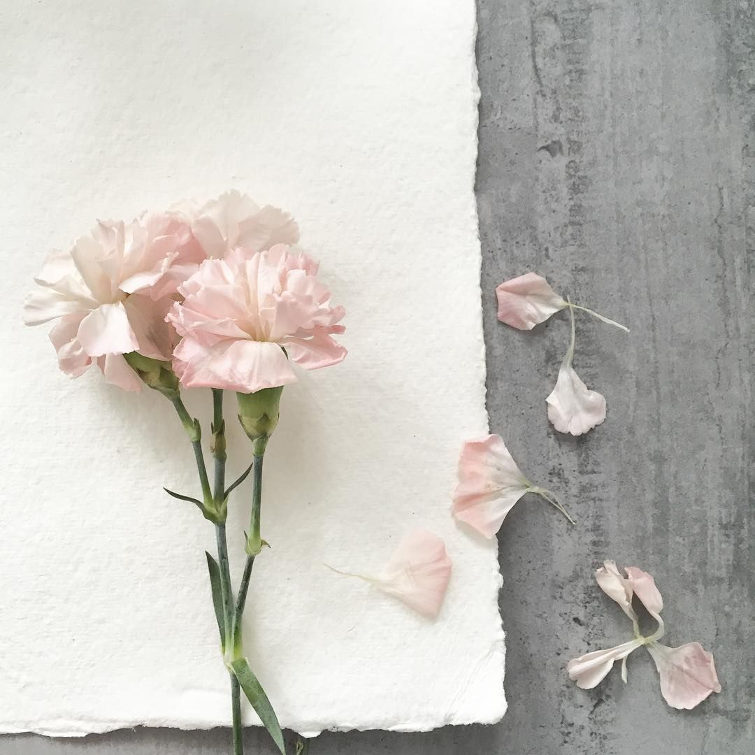 Love flowers when they're nearly at the end - so delicate and pretty #carnations #flowers #pink #tattypink  #flowersofinstagram #inspiredbynature #inspiration #colour