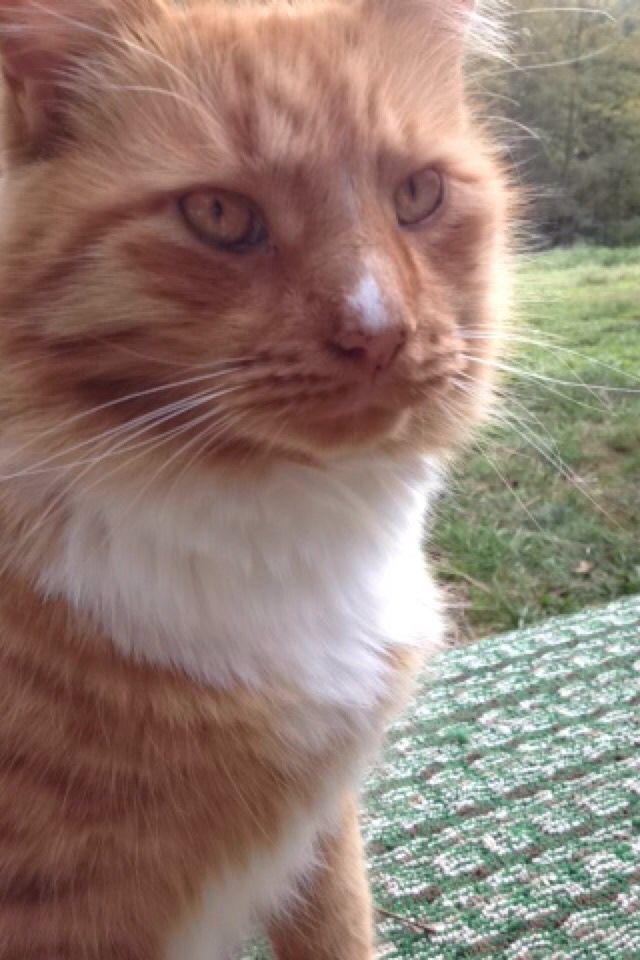 My cat lucky ❤️❤️❤️