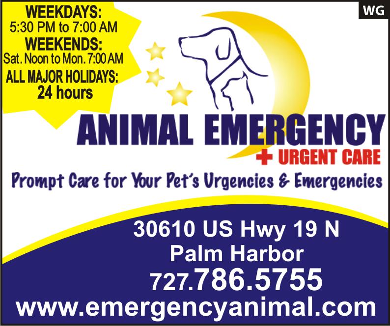 Emergency Animal Care New port richey, Oldsmar, Major