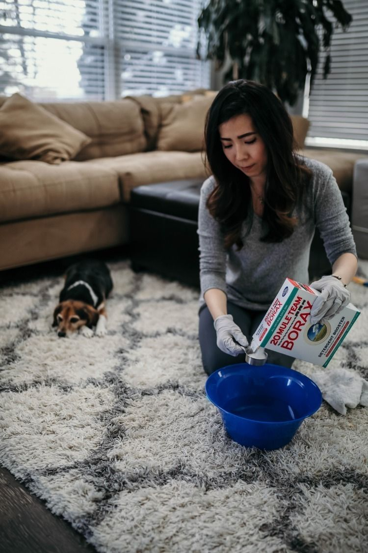 Freshen Up Your Carpets With Borax Pet Urine Pet Urine Smell Remove Pet Stains