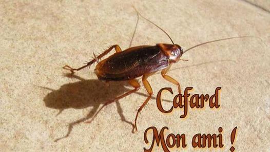 Cafard Mon Ami Video Dailymotion La Blatte Devient La