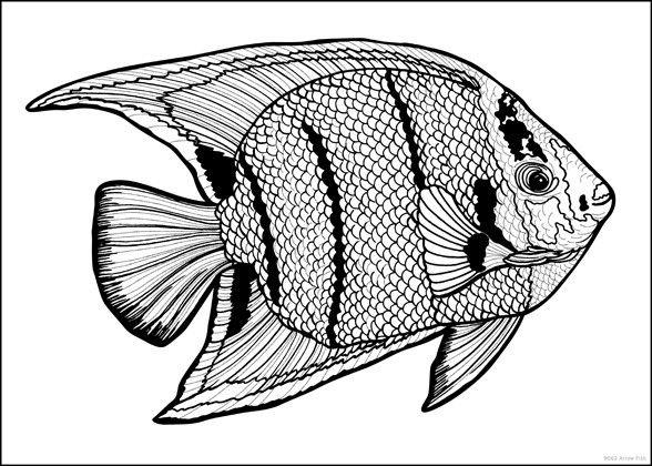 Arrow Fish Coloring Poster - Line Art, Doodle Art | Stuff2Color