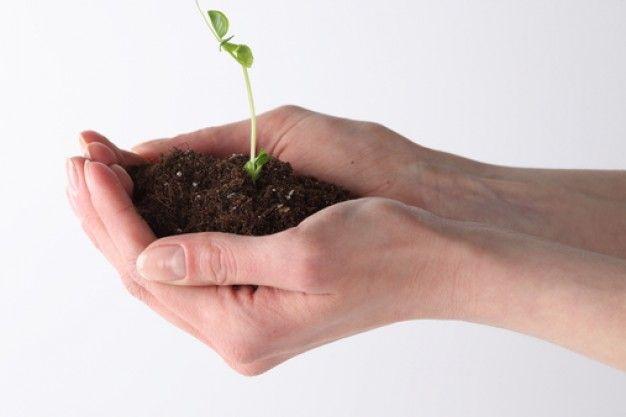 Blog O Kwiatach I Florystyce Slubnej Domowe Sposoby Na Kwiaty Doniczkowe Plants Herbs Flowers
