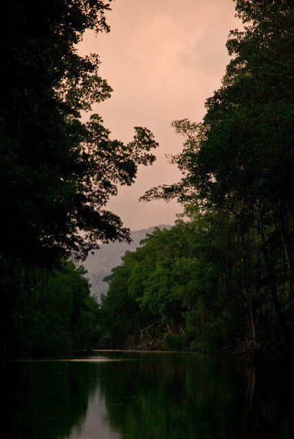 Caroni Swamp Trinidad Places To Visit Trinidad Trinidad And