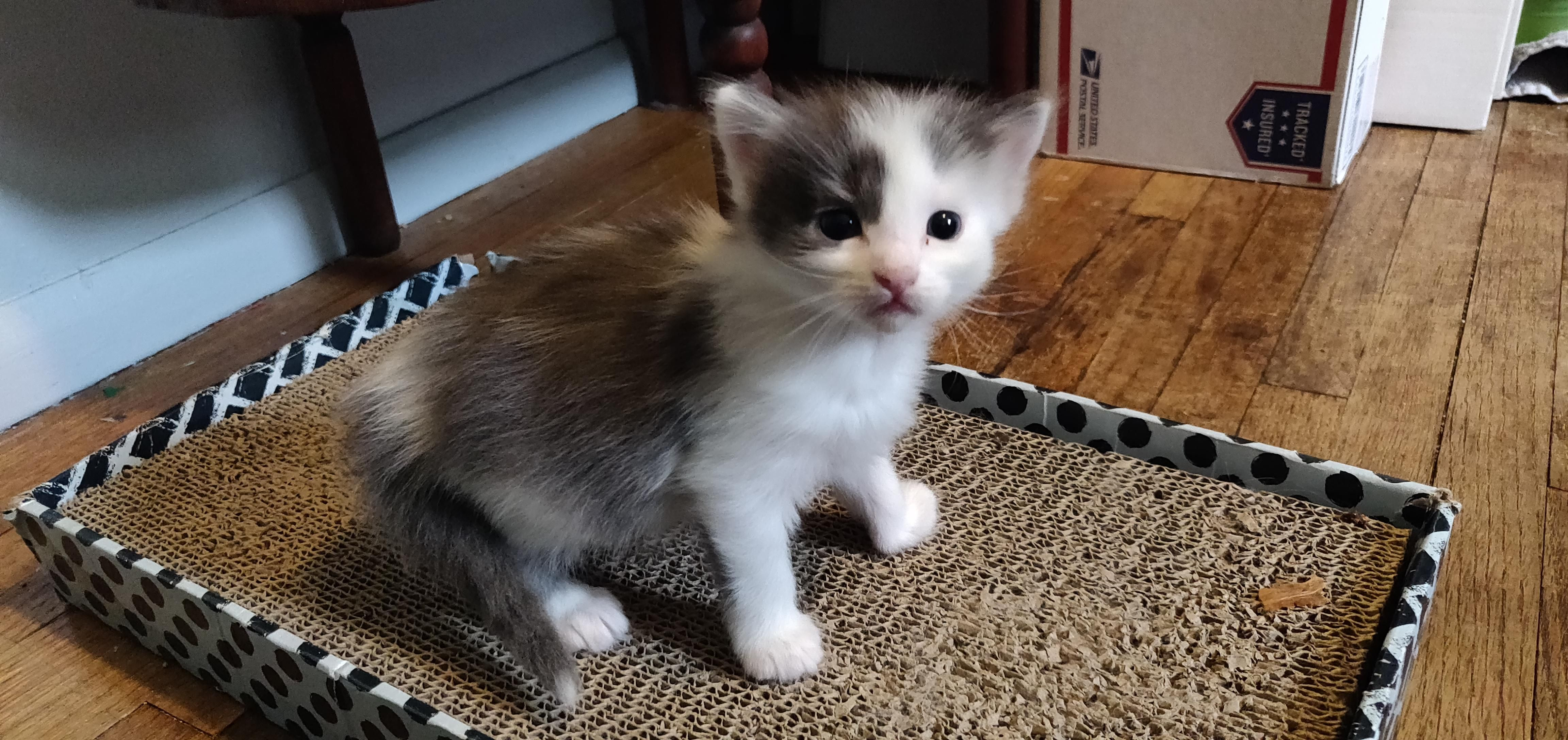 Four More Weeks And I Can Take This Dumpster Baby Home Kittens Cutest Cat S Cute Cats