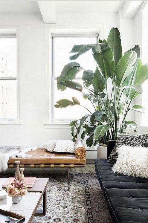 A Number Of Options To Select Indoor Plants For Your Apartment Or Home Classical Hanging Planters Are Likewise Great Manner Decorating House