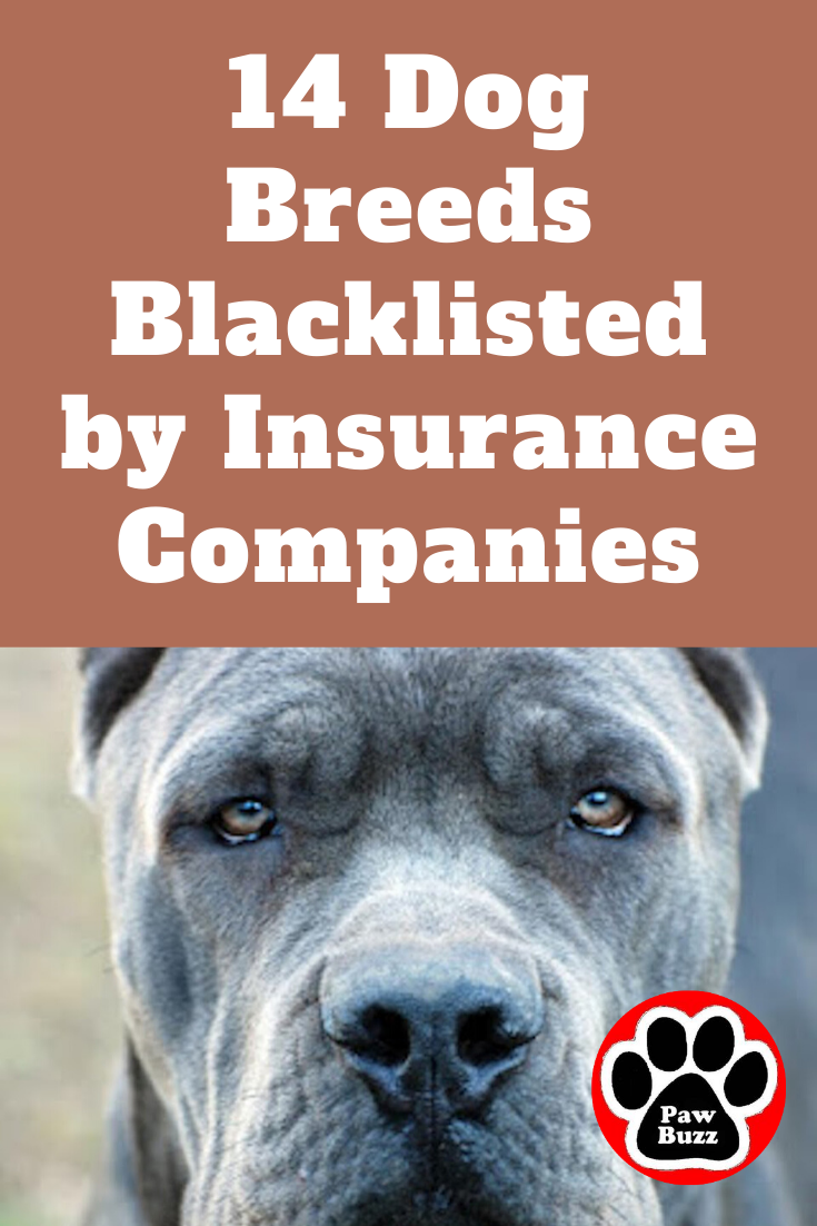 Pet Image By Michelle Doucette In 2020 Dog Breeds Dogs Breeds