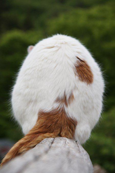 かご猫 Blog ふりむき