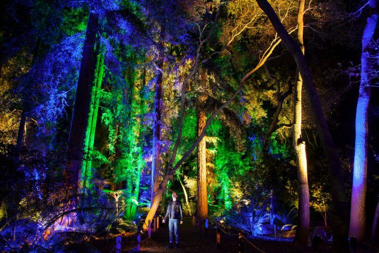 0c26001bdeb100420169022917d06d97 - Enchanted Forest Of Lights At Descanso Gardens
