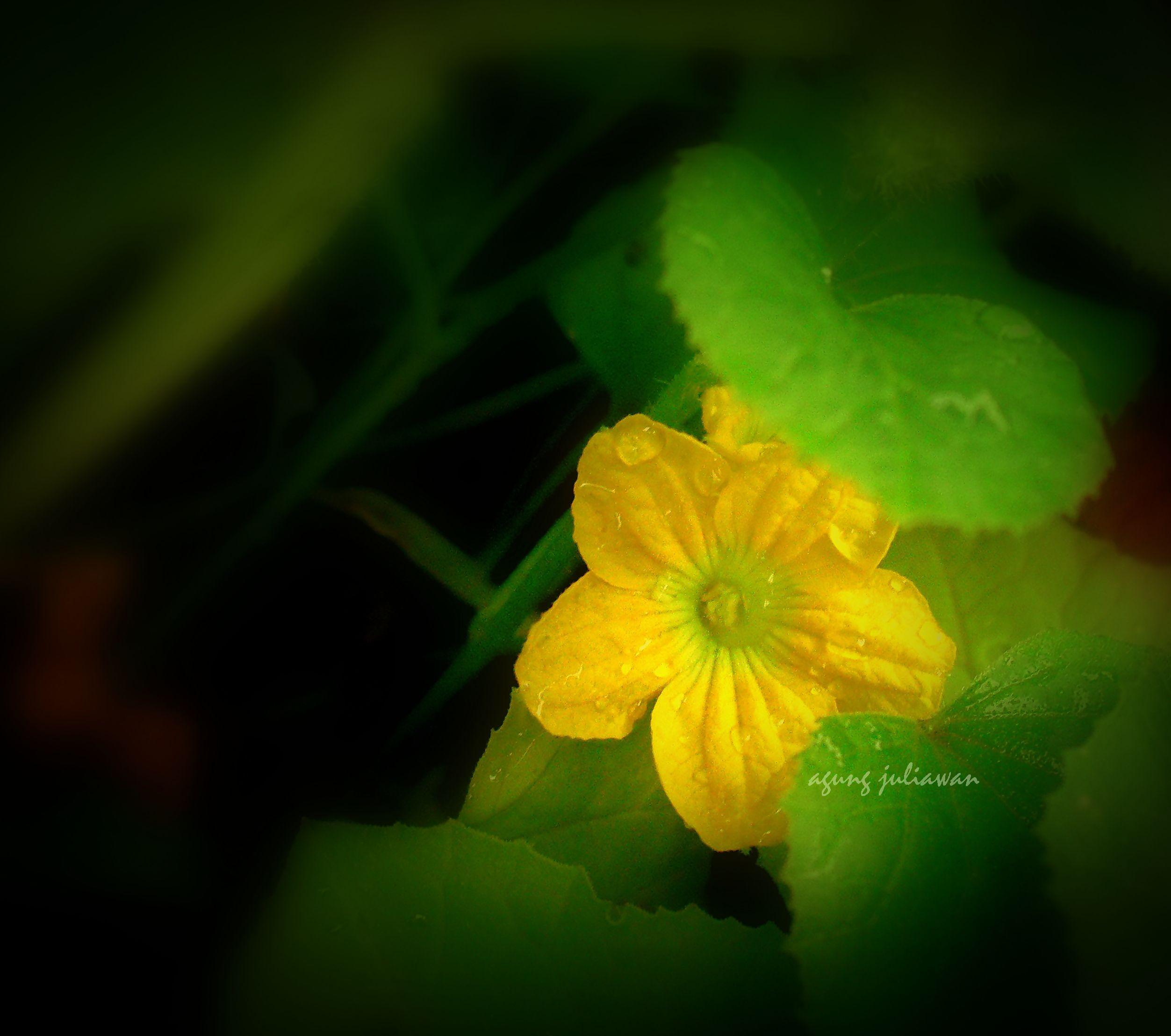 Tiny Yellow Flower Interesting Pinterest