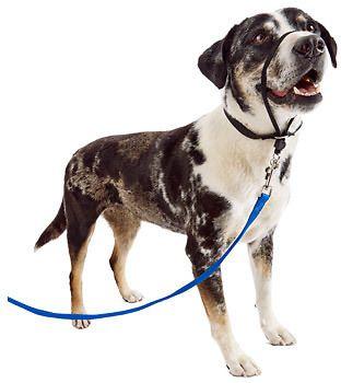 Gentle Leader Petco Google Search Gentle Leader Petco Dogs