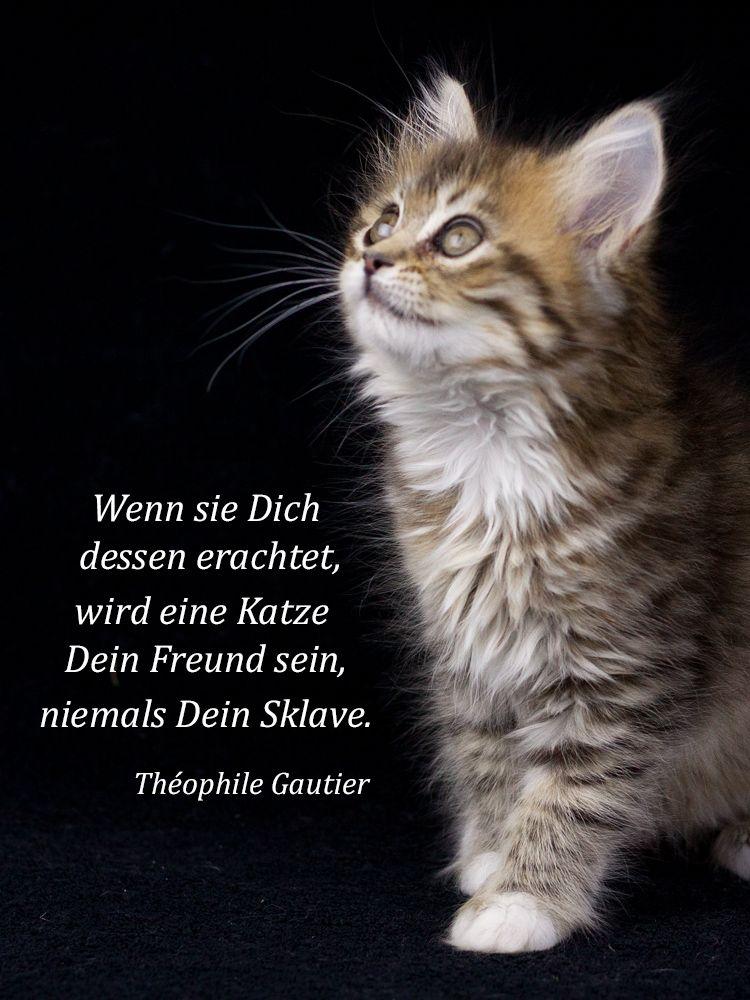 Cat Auf Deutsch