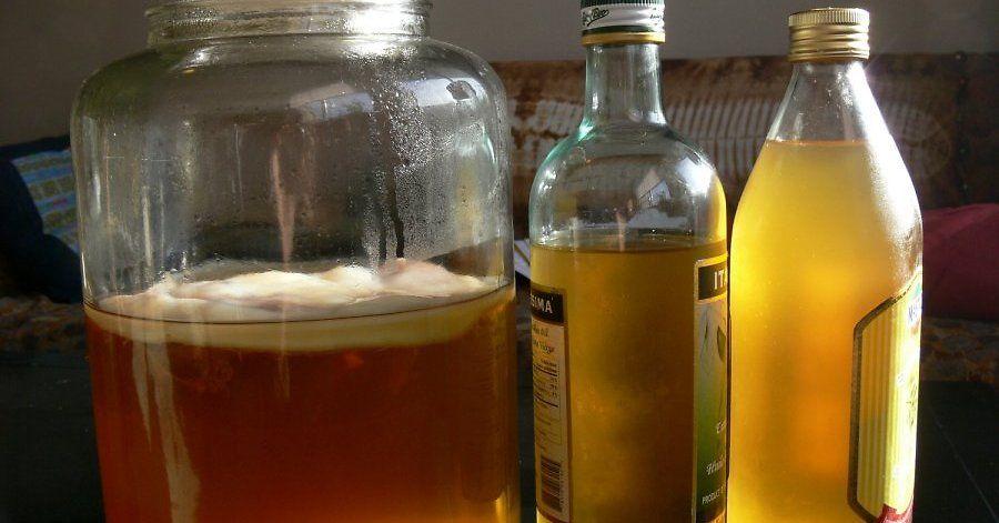 Tējas sēne. Kas tajā veselīgs un kā to audzē.