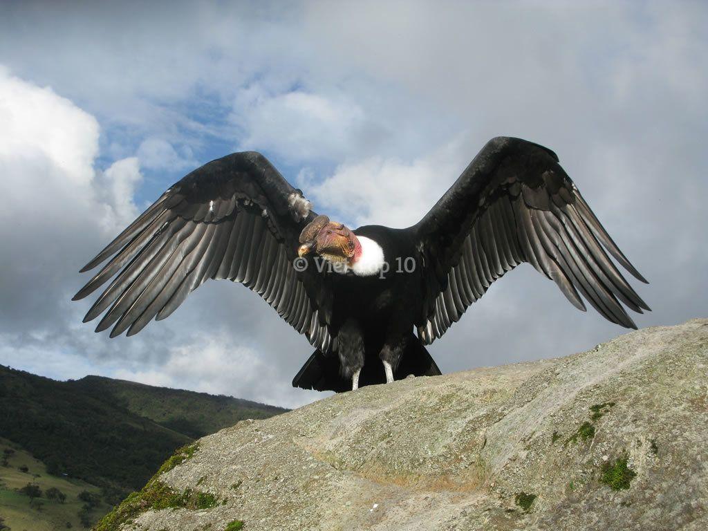 loài chim lớn nhất - việt top 10 - việt top 10 net - viettop10