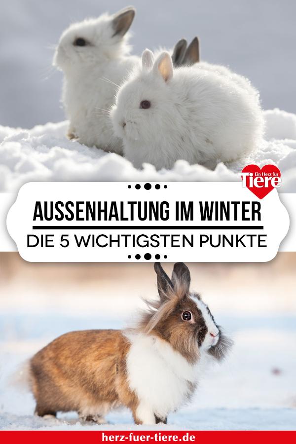 23+ Außenhaltung von Kaninchen im Winter – diese 5 Punkte sind überlebenswichtig Kollektion