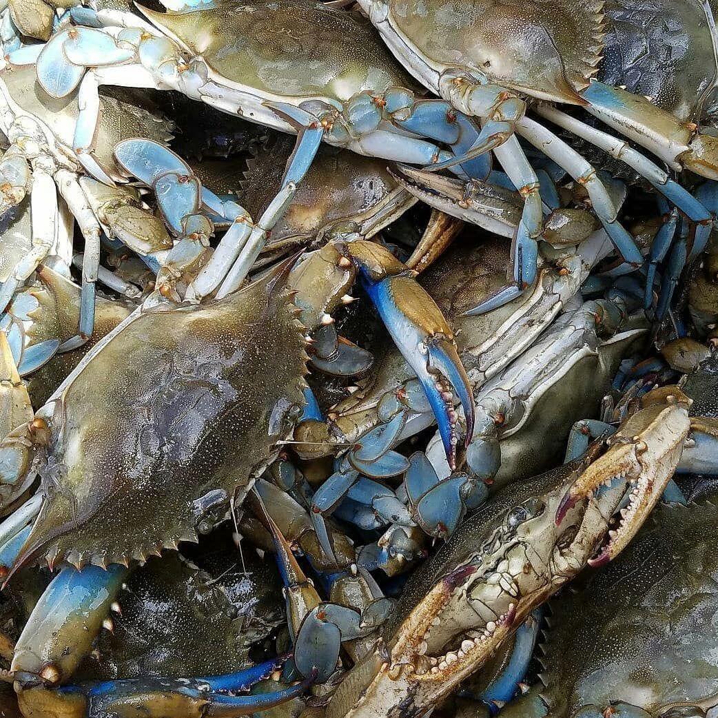recipe: order live blue crabs online [5]