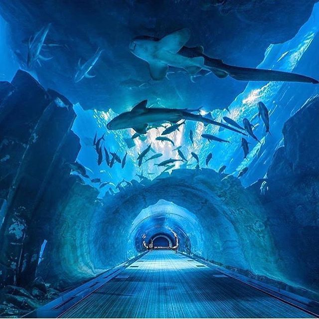 An Underwater Tunnel In Dubai Phenomenal Tag Someone You Would Walk With Dubai Aquarium Sea Life Bangkok Zoo Tickets