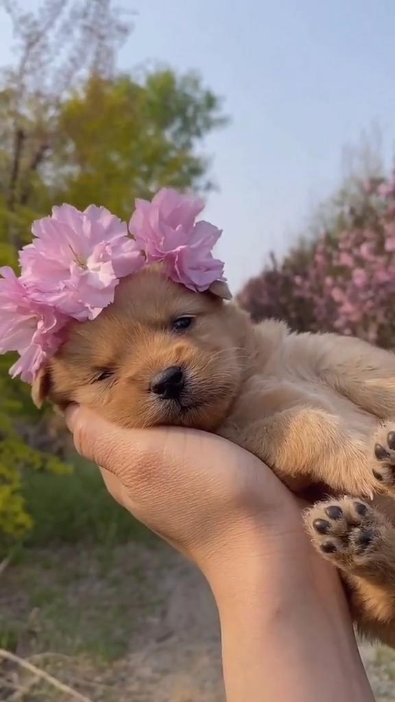 Cute dog. @goldensun39