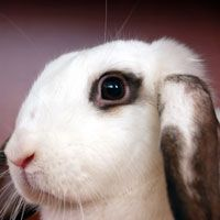 India Become First Cruelty Free Cosmetics Zone In South Asia Cruelty Free Cosmetics Cruelty Free Humane Society