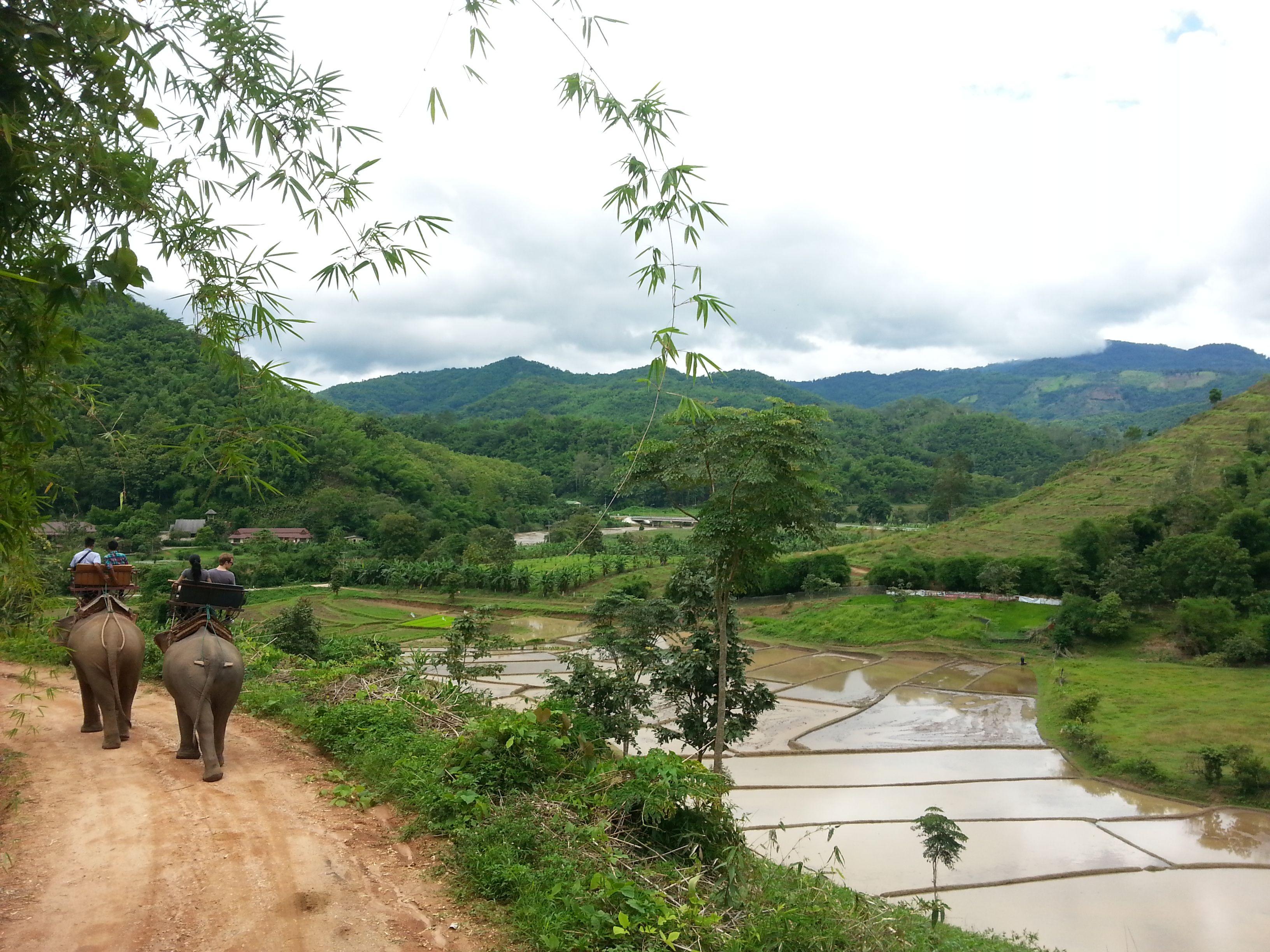 Elephant ride in Chiang rai