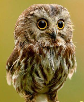Owls long legs