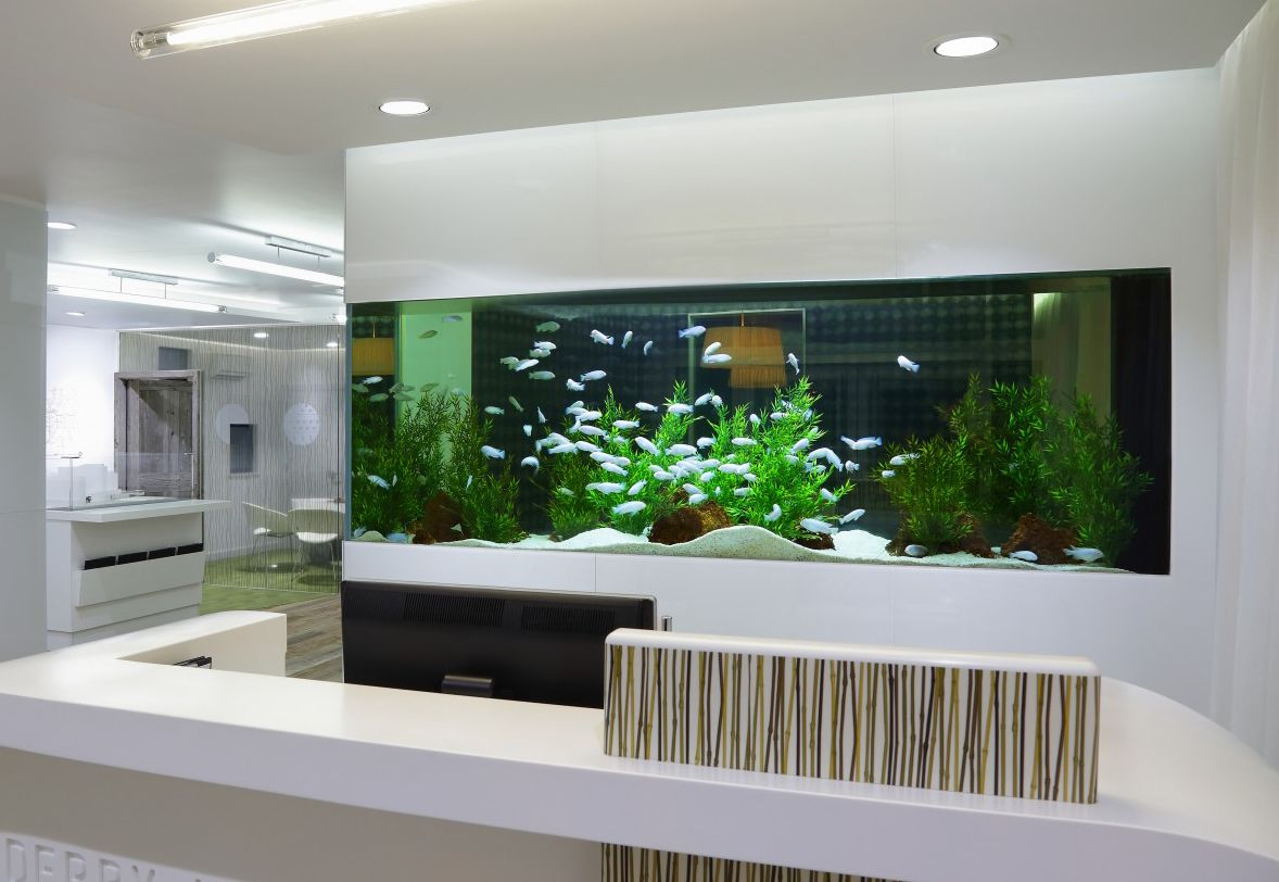 Built In Fish Tank Calming And Helps A Stress Free