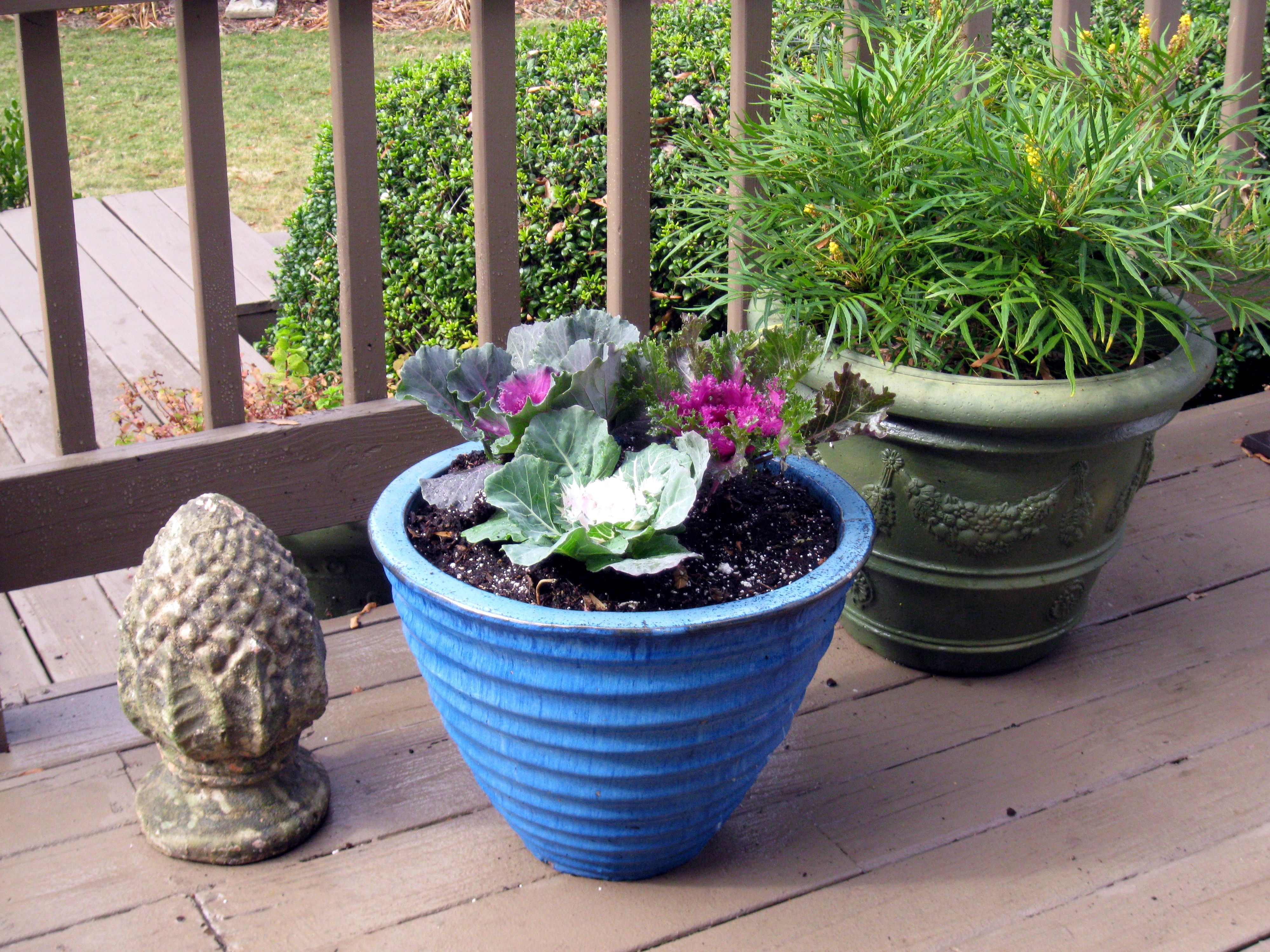 Winter container gardens Garden Ideas Pinterest