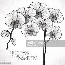 orchid drawing outline google search zeichnen pinterest zeichnen bastelideen und malen. Black Bedroom Furniture Sets. Home Design Ideas