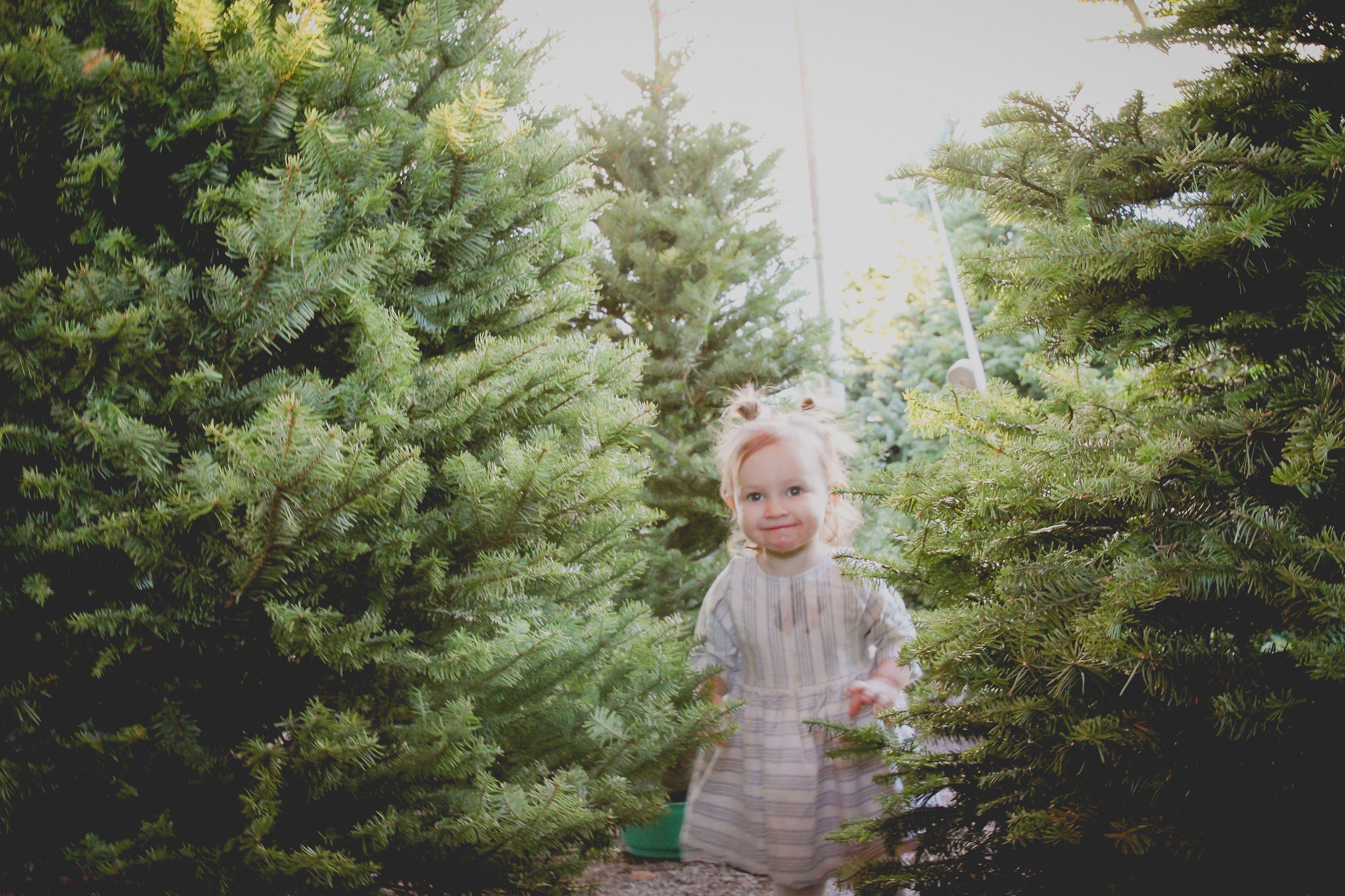 Phoenix Christmas Tree Farm Photoshoot Christmas Tree Farm Photo Shoot Christmas Tree Farm Photography
