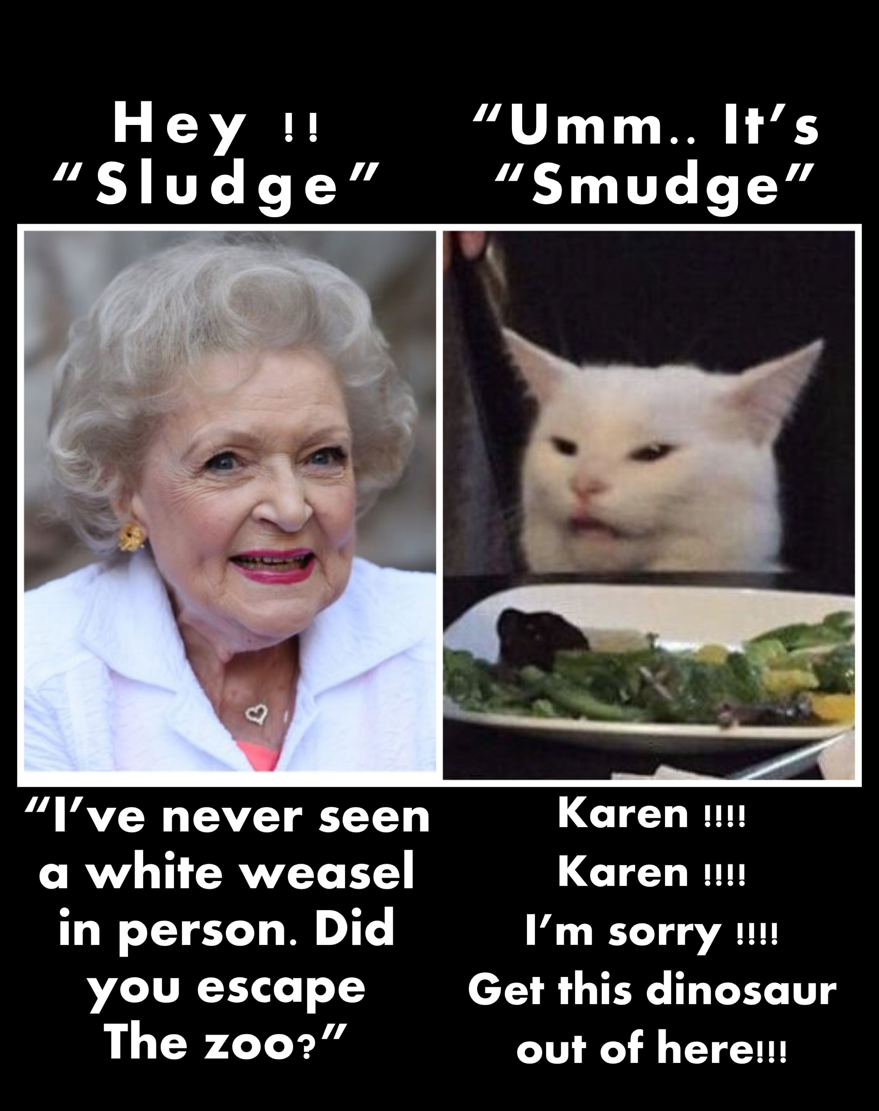 Pin By Bob Keefe On Smudge The Cat Memes Funny Animal Quotes Cat Jokes Clean Funny Memes