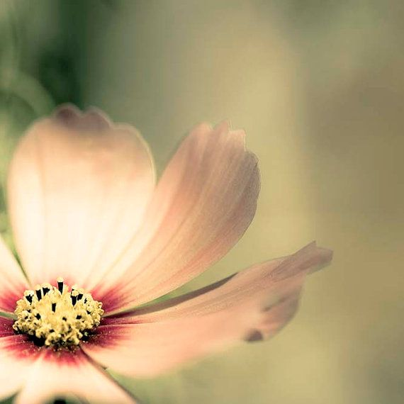 Pastel Decor, Green, Pink, Flower Photography, Shabby Chic Wall Art ...